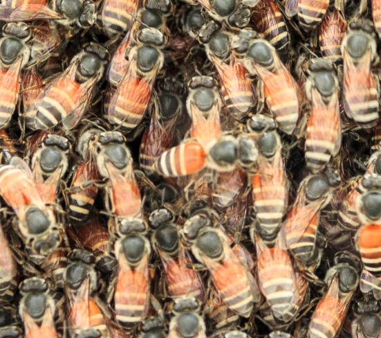 bees from thinkstock
