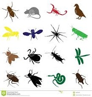 bugs and rodents